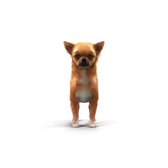 adult chihuahua on white. 3D illustration
