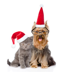 Cat and dog in red christmas hats sitting together. isolated on white