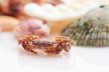 crab sitting on shell background