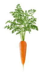 Vertical single carrot with green top isolated on white