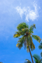 Coconut tree under blue sky and bright sun