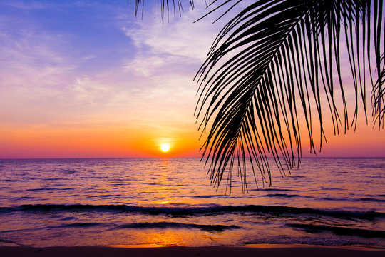 sunset landscape. beach sunset.  palm trees silhouette on sunset