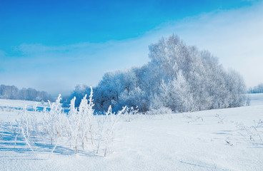 Beautiful winter landscape in frosty day and woods covered with hoarfrost