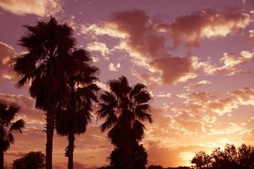 Ocala Florida USA - October 2016 - Palm trees with the sun going down through a cloudy sky