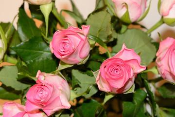 Valentinstag rosa Rose Geschenk Glückwunsch