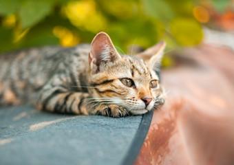 Cute kitten relaxing in the garden