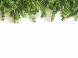 Green Christmas fir tree branches on a white background