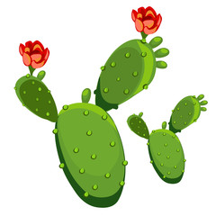 Cactus with flower. Vector illustration isolated