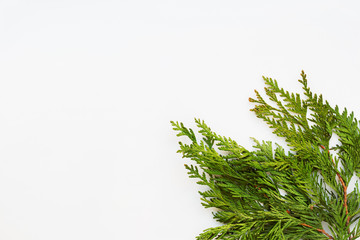 Clear white background with thuja branches. Place for text. Flat lay.