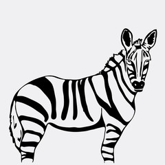 Hand-drawn pencil graphics, zebra. Stencil style