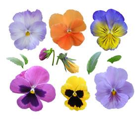 Set viooltjes op een witte achtergrond.