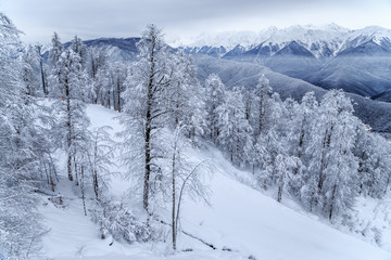 Winter snowy mountain forest and peaks beautiful scenery