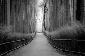 Black and White Bambu Forest Kyoto Japan