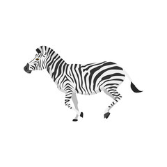 zebra were running