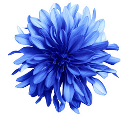 blue flower on a white  background isolated  with clipping path. Closeup. big shaggy  flower. for design.  Dahlia.