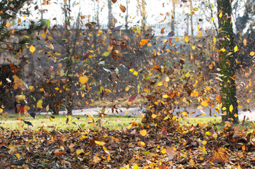 Falling leaves, Wind Blows Away the Autumn Leaves