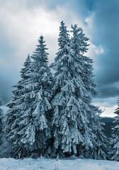Winter in the Romanian Carpathians