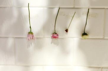 Set of wild dry flowers