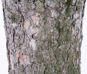 Bark of a pine tree to create wallpaper, texture or background