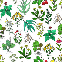 Wall Mural - Drug plants and medicinal herbs vector background on white