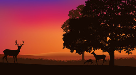 deer grazing at sunset under trees - evening nature landscape