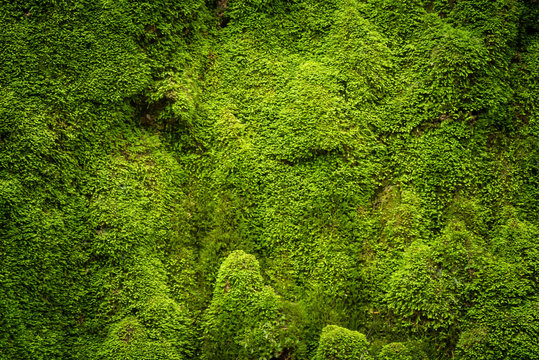 Grooved green moss background in nature