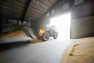 Dumper Truck Unloading Wheat Into Grain Store