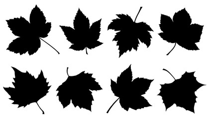 sycamore leaf silhouettes