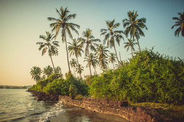 Palm trees in Goa on a background of blue sky and river