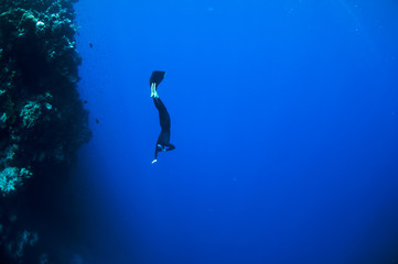 Spoed Fotobehang Duiken Freediver moves underwater along coral reef