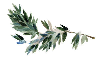 Watercolor branch with green leaves isolated on a white backgrou