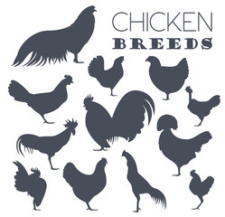 Poultry farming. Chicken breeds icon set. Flat design