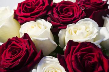 Красные и белые розы крупным планом