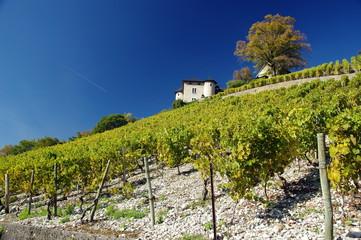 monterminod - vignobles de savoie