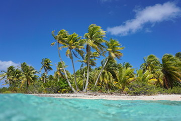 Tropical seashore with coconut palm trees, seen from the water surface, atoll of Tikehau, Tuamotu archipelago, French Polynesia, Pacific ocean