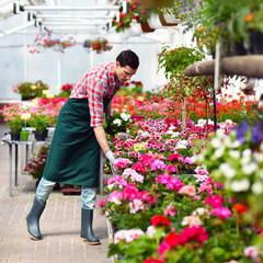 Gärtner eines Blumenhandels arbeitet im Gewächshaus