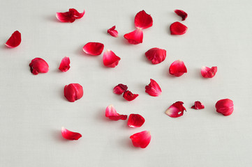 Red rose petals on a white background