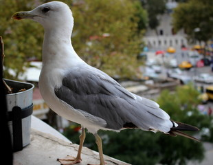 seagulls, bird, animal, nature, beauty, wallpaper, Awesome