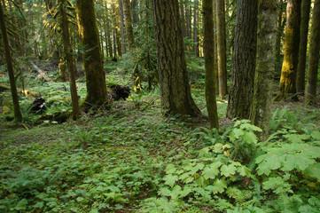 Green ferns and undergrowth