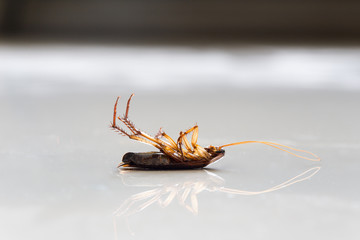 Dead cockroach on floor