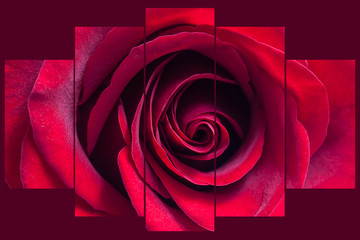 Red rose collage, floral wallpaper. Interior decor mock up