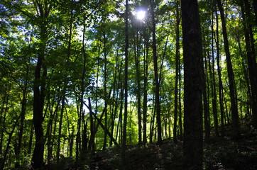 Sunshine through green forest