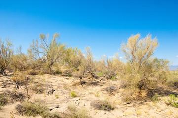steppe summer. Turgai save. Lake in the desert