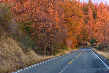 Paved road with autumn trees on both sides