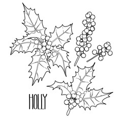 Graphic holly collection