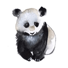 Small panda isolated on a white background, watercolor