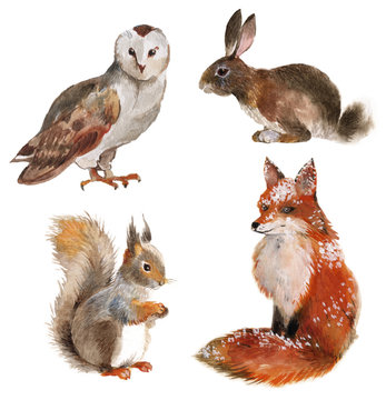 Set of four forest animals isolated on a white background