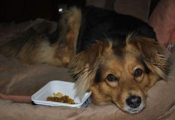 Отдых собаки после кормления