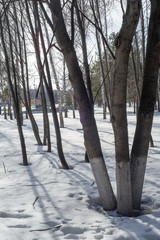 park, trees in early spring, melting snow, lime in the spring