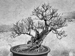 CN Suzhou BOnsai Naked Tree